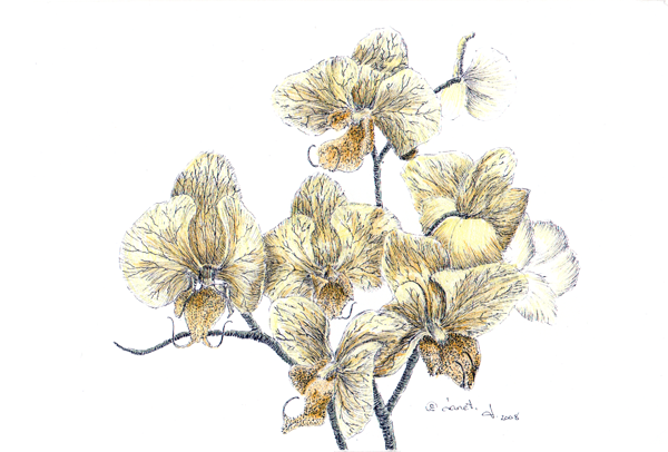 Pen & ink with watercolor - copyright Janet Jacques