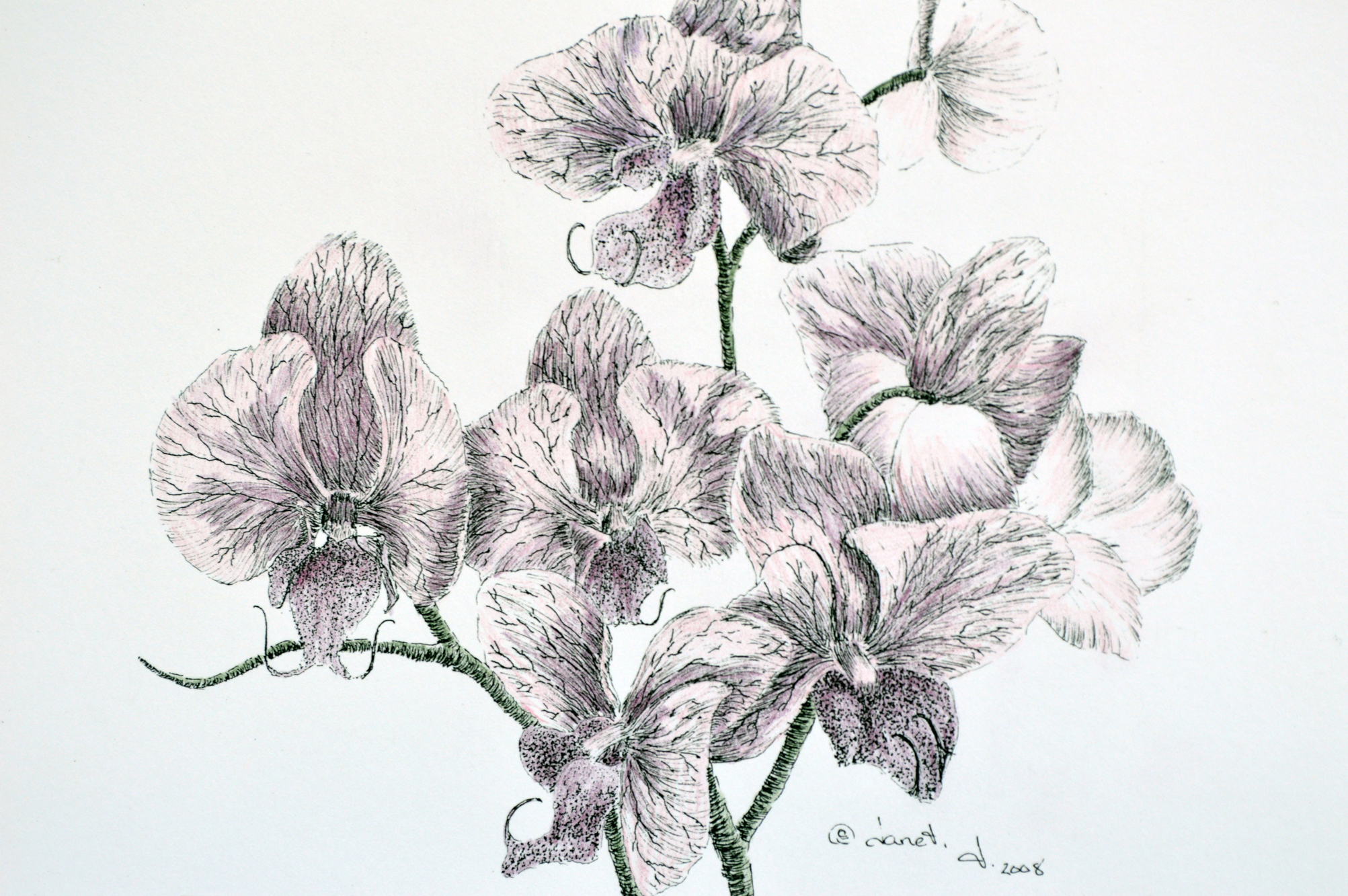 Pen & Ink + Watercolor = Orchids